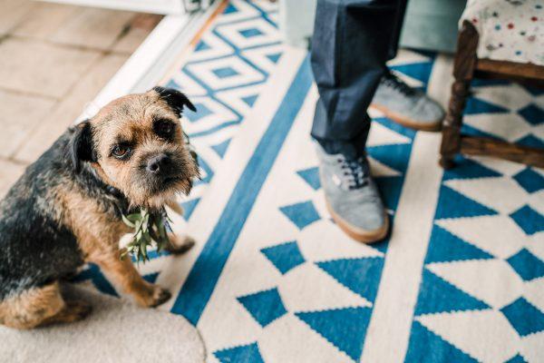 dog wear floral neck tie